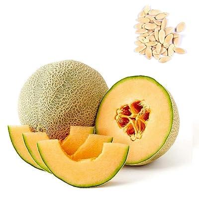Oliote Annual Bonsai Cantaloupe Melon Seeds Fruit Seeds Fruits : Garden & Outdoor