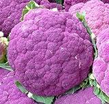 Cauliflower Seeds- Sicilian Violet- Heirloom Variety- 200+ Seeds