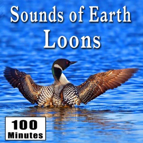Amazon.com: Haunting Loon Calls In Their Natural Habitat