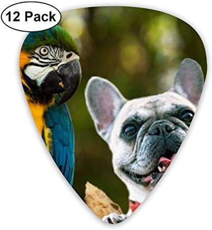 Blue Macaw Bird Parrot Guitar Picks Plectrums Acoustic Guitar Ukulele Picks 0.46 Mm, 0.73mm, 0.96 Mm,12 Pack: Amazon.es: Instrumentos musicales