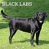 Black Labrador Retrievers 2019 12 x 12 Inch Monthly Square Wall Calendar with Foil Stamped Cover, Animals Dog Breeds Retriever (Multilingual Edition)