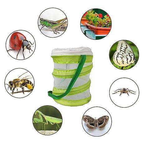 Chifans Estuche de cría de Insectos, Jaula de observación, Plegado ...