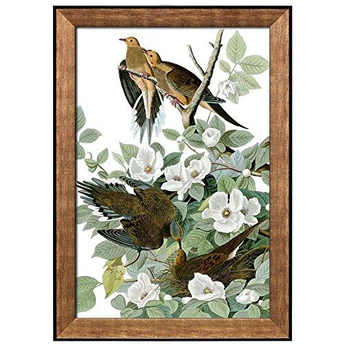 Beautiful Illustration Inside of an Elegant Frame of a Mourning Dove by John James Audubon Framed Art