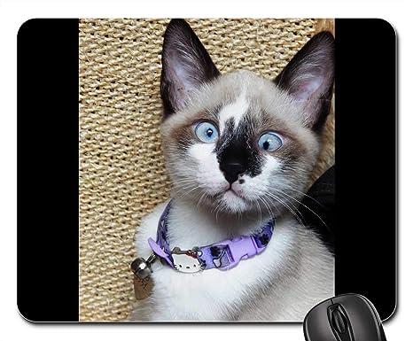 Amazon.com: Mouse Pads - Gata Cat Kitten Animal Linda Pet ...