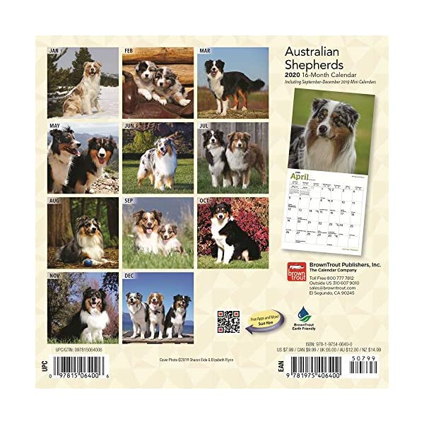 Australian Mini Shepherds Calendar 2020 Set - Deluxe 2020 Australian Shepherds Wall Calendar with Over 100 Calendar Stickers (Ausssie Gifts, Office Supplies) 2
