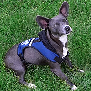 Pets First Virginia Tech Harness, Small