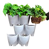 SELF Watering Vertical Wall Hangers with Pots