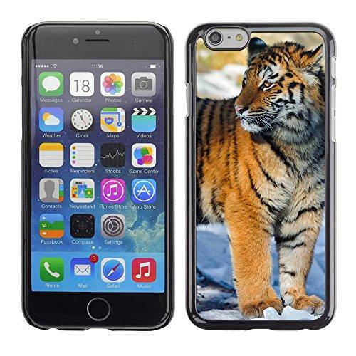 "Premio Sottile Slim Cassa Custodia Case Cover Shell // V00003937 tigre debout dans la neige // Apple iPhone 6 6S 6G PLUS 5.5"""