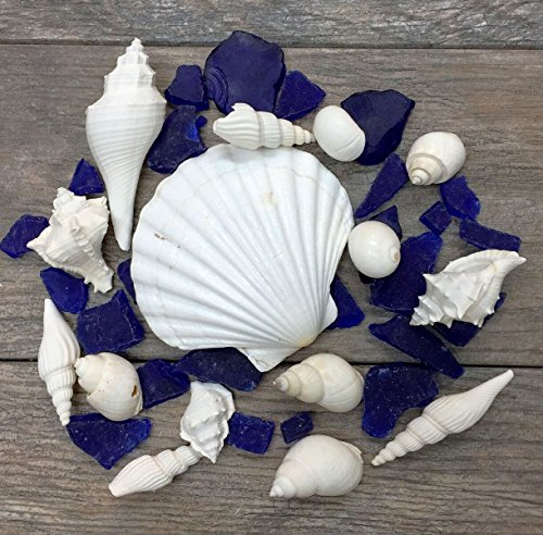White-Shells-with-Cobalt-Blue-Sea-Glass-Deep-Irish-Shell-w-Blue-Sea-Glass-for-Decoration-Shells-for-Craft-Nautical-Crush-Trading-TM