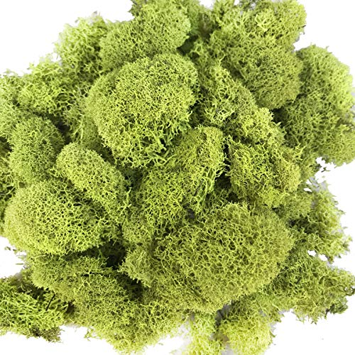 - Reindeer Moss Preserved Floral Moss for Fairy Gardens, Terrariums, Any Craft or Floral Project or Wedding Other Arts(Chartreuse)
