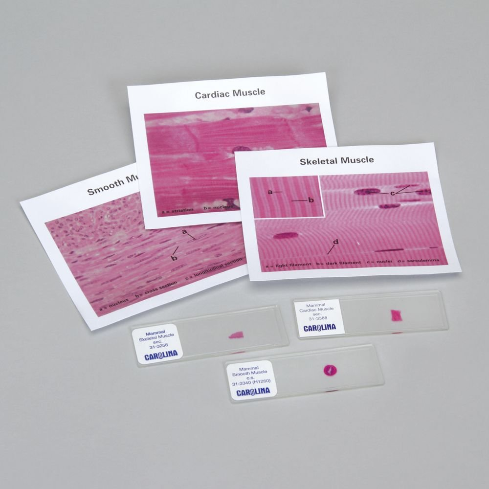 Discovering Muscle Types Self-Study Unit, Microscope Slide Set