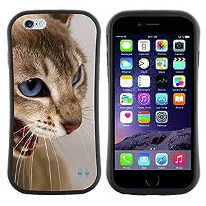 "Pulsar iFace Series Tpu silicona Carcasa Funda Case para Apple iPhone 6 / 6S (4.7 INCH) , Cat Blue Eyes Marrón Blanco Enojado Dientes"""