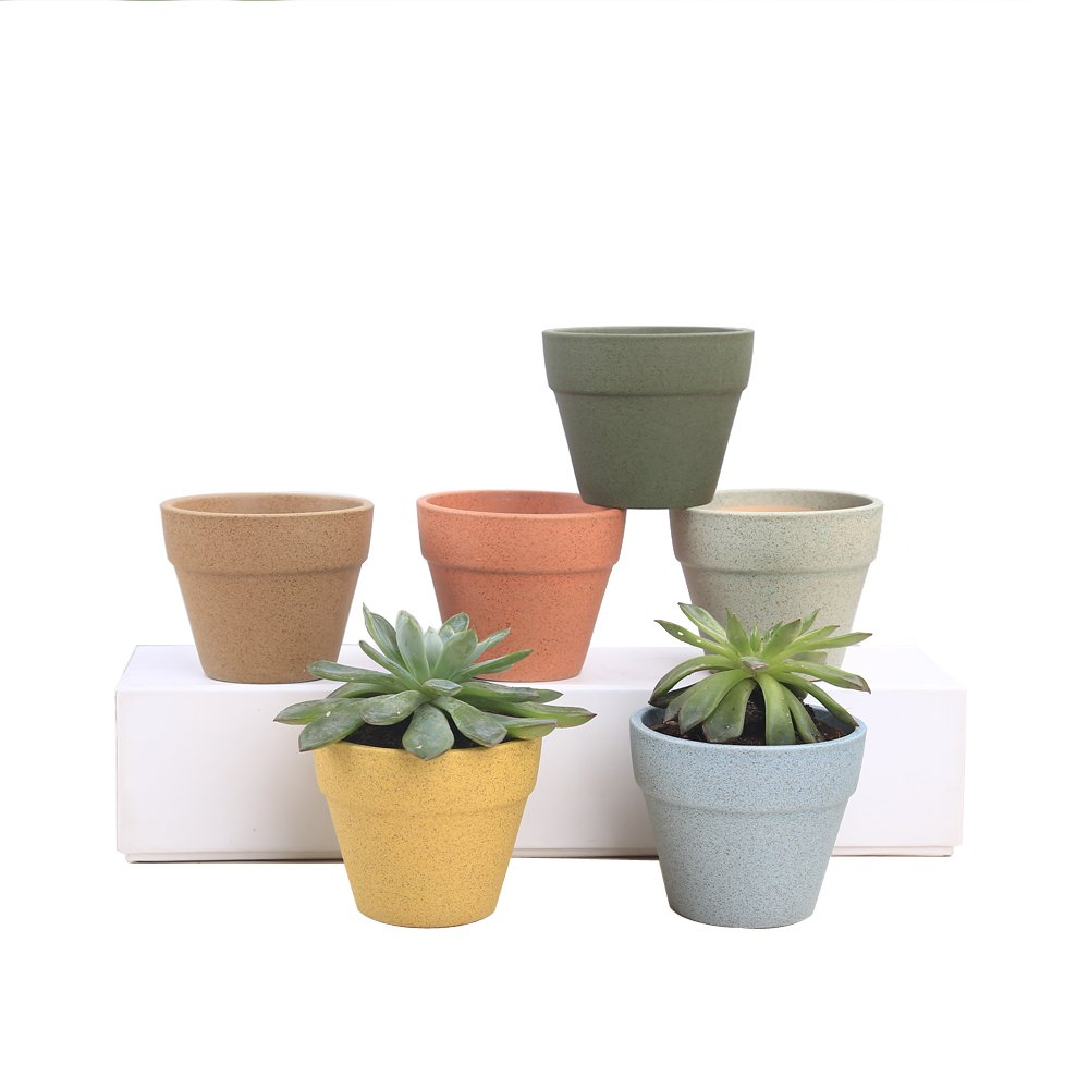 Senjie Succulent Planter,Indoor Small Mini Ceramic Plant Pots with Drainage for Cactus Set of 6 by Senjie
