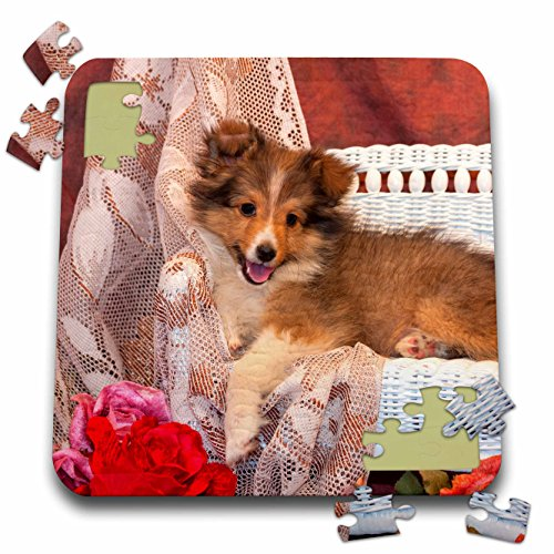 (Danita Delimont - Dogs - Shetland Sheepdog lying on a white wicker couch and doily, MR, - 10x10 Inch Puzzle (pzl_207518_2))