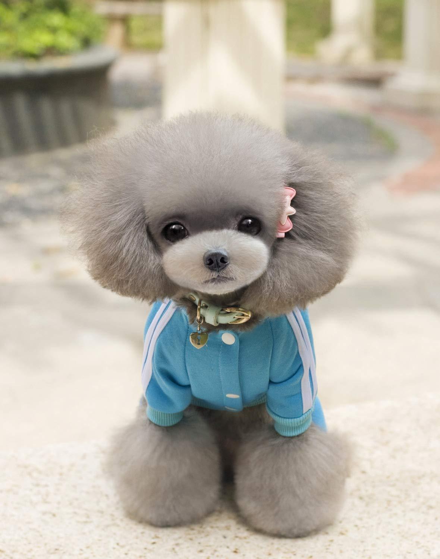 Costume da compagnia per feste Abbigliamento per cani cani cani vestiti per cani autunno e inverno vestiti per animali da compagnia orso violento a quattro zampe maglione (colore  Blu cielo, Taglia  XL) Pet Uni 638676