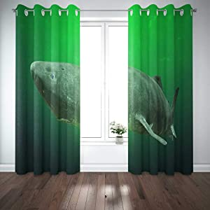 EMMTEEY 52X84 Curtains 2 Panels Shark Near The Ocean Ground with Known of All Species Somniosus Microcephalus Longest Lifespan Vertebrate Window Curtain Panels for Living Room Bedroom Décor