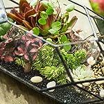 Large-Handmade-Irregular-Polyhedral-Geometric-Glass-Terrarium-Planter-Indoor-Air-Plants-Holder-Window-Balcony-Display-Box-Succulent-Flower-Pot-DIY-Centerpiece-for-Wedding-Table-Garden-Decor-11inches
