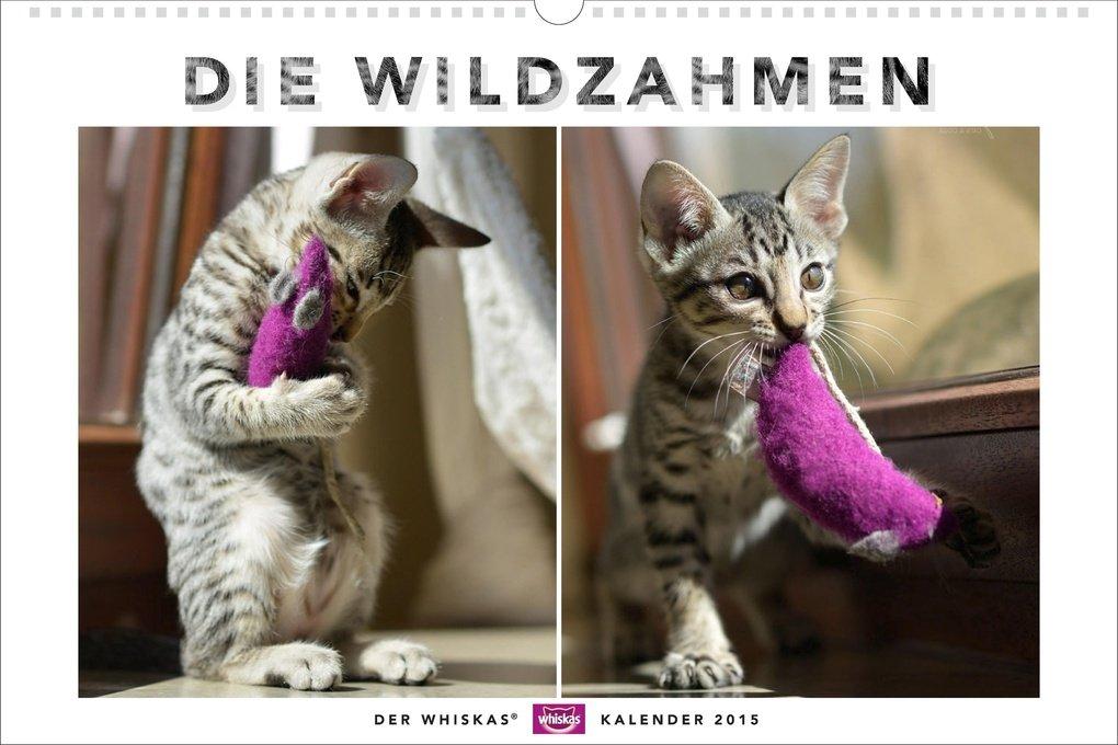 Whiskas Katzenkalender 2015