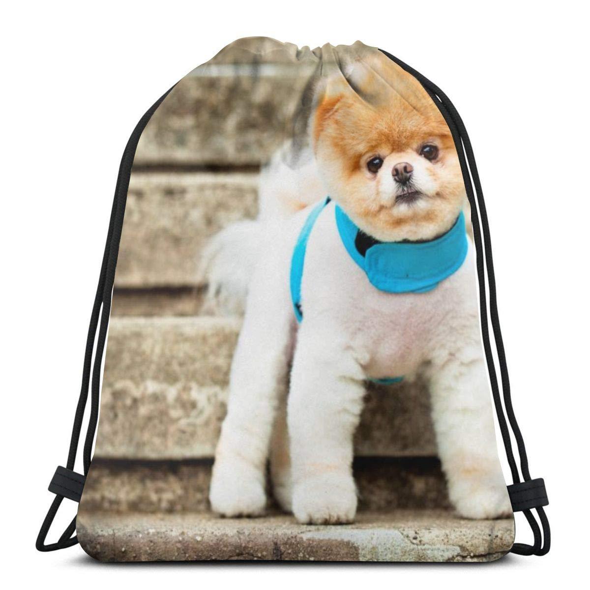 Amazon.com | Pomeranian dog breed face eyes ears collar ...