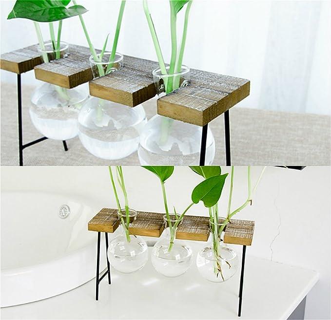 Amazon.com: vidrio maceta foco florero para plantas ...