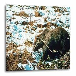 3dRose TDSwhite – Winter Seasonal Nature Photos - Winter Theme Grizzly Bear - 15x15 Wall Clock (dpp_285022_3)