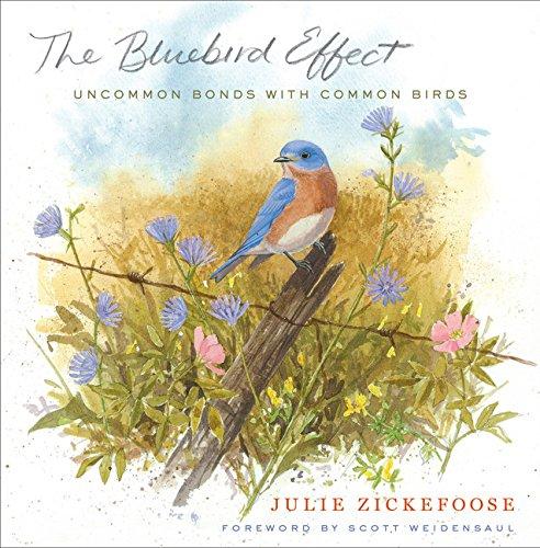 The Bluebird Effect: Uncommon Bonds with Common Birds [Julie Zickefoose] (Tapa Dura)