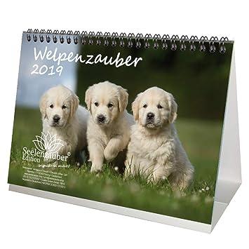 Welpenzauber Din A5 Premium Tischkalenderkalender 2019 Hunde