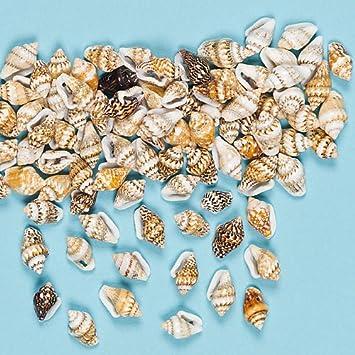Mini Muscheln Zum Basteln Fur Kinder Dekoration Packung Mit 200
