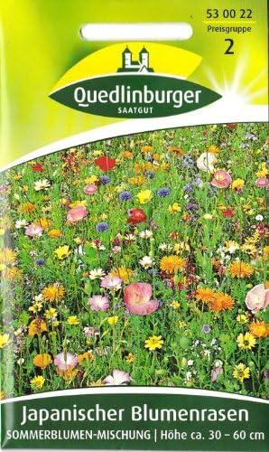 Japanischer Blumenrasen Quedlinburger