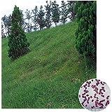芝の種:西洋芝センチピートグラス1kg[草丈10~20cm 暖地型・ムカデシバの種 法面緑化・飛砂防止・公園・緑地帯用]