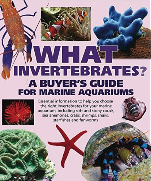 What Invertebrates A Buyer S Guide For Marine Aquariums What