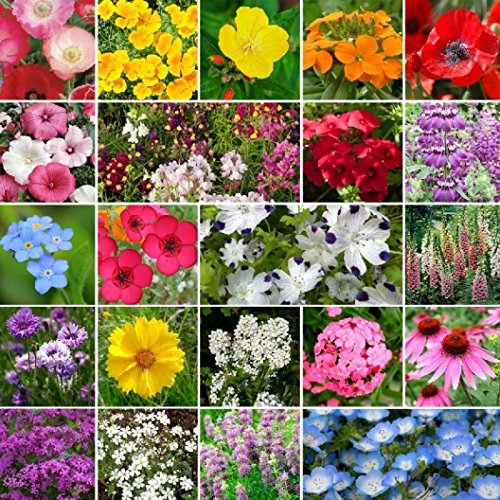 David's Garden Seeds Wildflower Partial Shade Seed Mix GP115J (Multi) 500 Open Pollinated Seeds