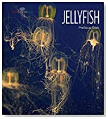 Jellyfish (Living Wild)