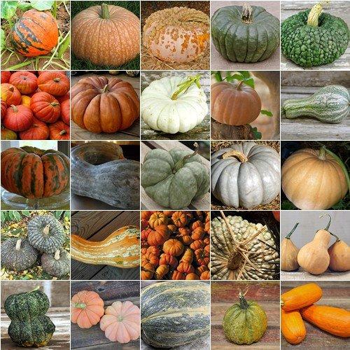 HEIRLOOM NON GMO French Pumpkin Mix 15 Seeds (Heirloom Mix)