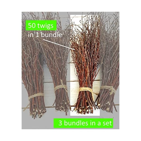 150 Birch twigs – 3 bundles. white birch branches, Centerpieces.Thin birch branches.birch branches for decoration, Decorative branches (3x50pcs bundles)