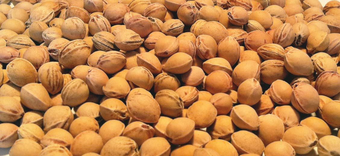 Eigenmarke - Huesos de cereza para relleno de cojín (5 kg)