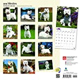 West Highland White Terriers 2018 12 x 12 Inch