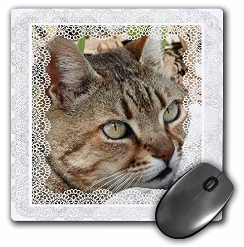 (3dRose Taiche - Greeting Cards - Cats - Cat Time A portrait of a female tabby cat ready to pounce with delicate lace border - MousePad (mp_128296_1))