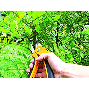 "Ascend Tools Professional Garden Hand Flower Pruner 8-1/2"" - Extra Sharp Secateurs, Rust Proof, Safety Lock, Ergonomic"