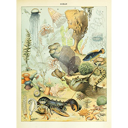 Meishe Art Vintage Poster Print Marine Life Organism Deep Sea Fish Creatures Fishes Species Breeds Identification Reference Chart Collection Wall Decor Lobster Jellyfish Shrimp Shark Starfish
