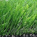 ILS - 500 pezzi/pacco Semi erba sempreverde Erba sempreverde Semente Pianta Giardino sempreverde Erba da prato 61U4Vl3zofL. SS150