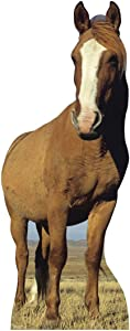 Advanced Graphics Horse Life Size Cardboard Cutout Standup