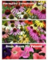 Paradiso Mix Coneflower Seeds (Echinacea) 50 Seeds Upc 600188190250 & Free Pack Dream Mix Petunia