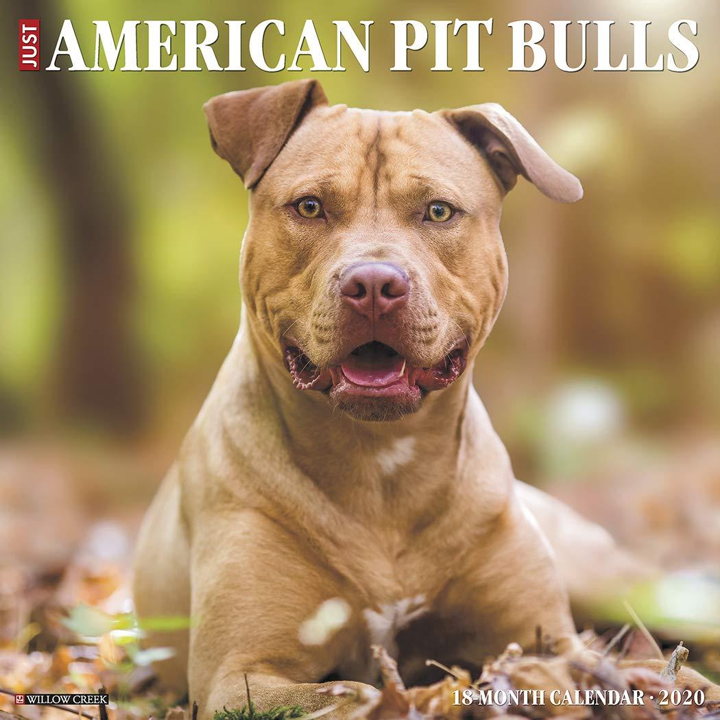 American Pit Bull Terrier Puppies 2020 Wall Calendar Dog Breed Calendar