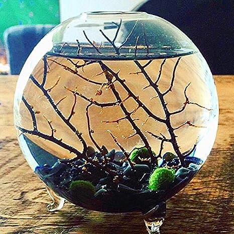 EssenceLiving Jarrón de Cristal con 3 Bolas de Marimo, Color Negro, Grano de obsidiana, Diseño de Coral en Miniatura, Decoración para el Acuario: Amazon.es: ...