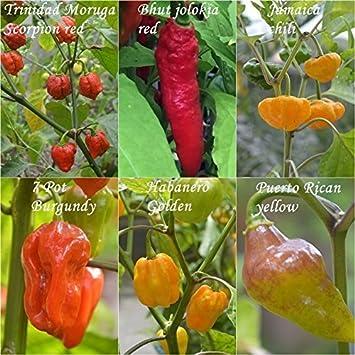 diabólico Chilis - 6 tipos - Nitidez: 8 a 10 +++ por 5 o 10 semillas - varietal lleno -: Amazon.es: Jardín