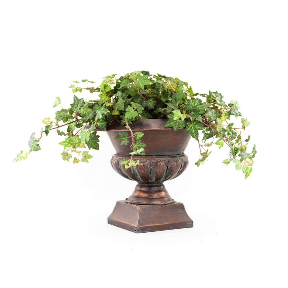 AMERICAN PLANT EXCHANGE Easy Care English Ivy Large Leaf Trailing Vine Live Plant 6'' 1 Gallon Top Indoor Air Purifier! by AMERICAN PLANT EXCHANGE (Image #3)