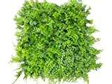 Artificial Hedge Plant Privacy Fence Screen Greenery Panels for Both Outdoor or Indoor, garden or backyard home decorations (48pack around 132 sqf) (20x20 inch Artificial Style B, 48PC)