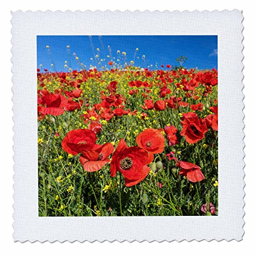 3dRose Danita Delimont - Flowers - Spain, Andalusia. A field of bright and cheerful red poppy wildflowers - 18x18 inch quilt square (qs_277891_7) by 3dRose