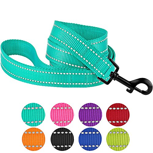 CollarDirect Nylon Dog Leash 5ft for Daily Outdoor Walking Running Training Heavy Duty Reflective Pet Leashes for Large, Medium & Small Dogs (L, Mint Green)